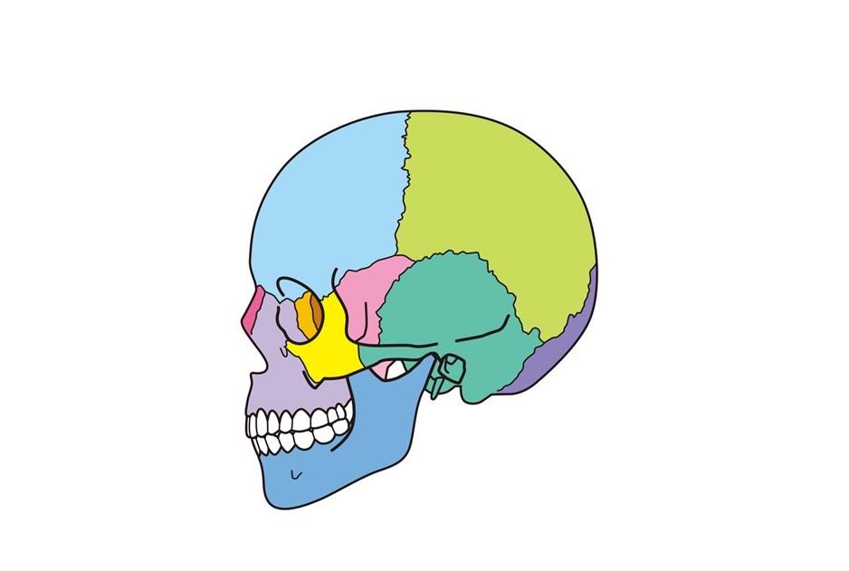 銀座みらい歯科 噛み合わせ治療と歯と頭蓋骨のイメージ