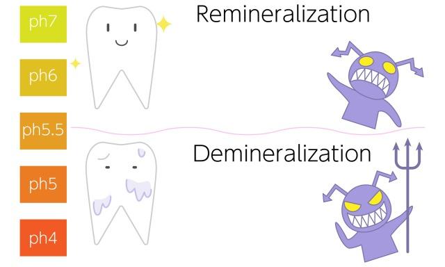 銀座みらい歯科院長コラム|口腔内PH値と唾液のはたらき|PH値と唾液の緩衝作用