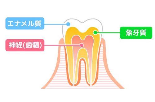 銀座みらい歯科|院長ブログ|歯の神経「歯髄」の処置について|歯の構造を説明する図